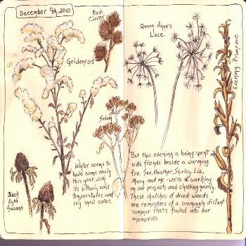 This is my first contribution to the Sketching in Nature group and I'd like to introduce myself. Th